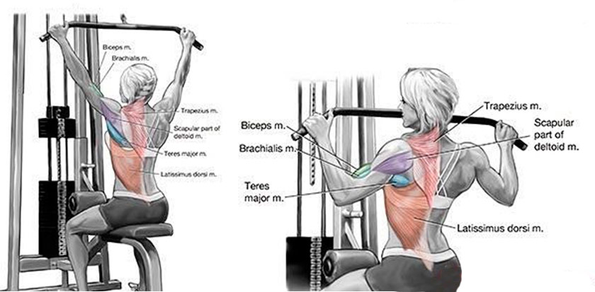 TOP 20 Lat Pulldown Machine Exercises for Best Workout