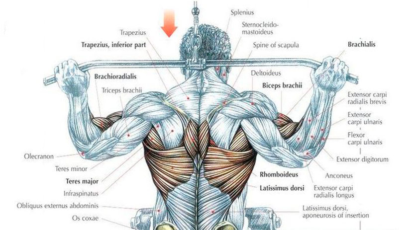 Wide Grip Pulldown Behind Neck