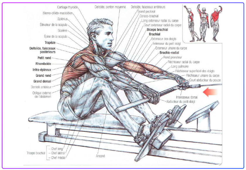 What Muscles do a Rowing Machine Workout?